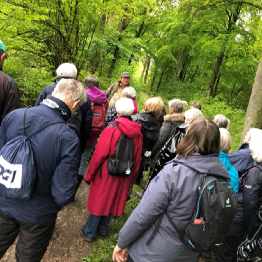 Seniorer går i skov