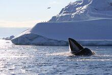 hvalernes skjulte liv